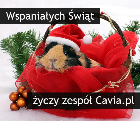 Kartka świąteczna od Cavia.pl